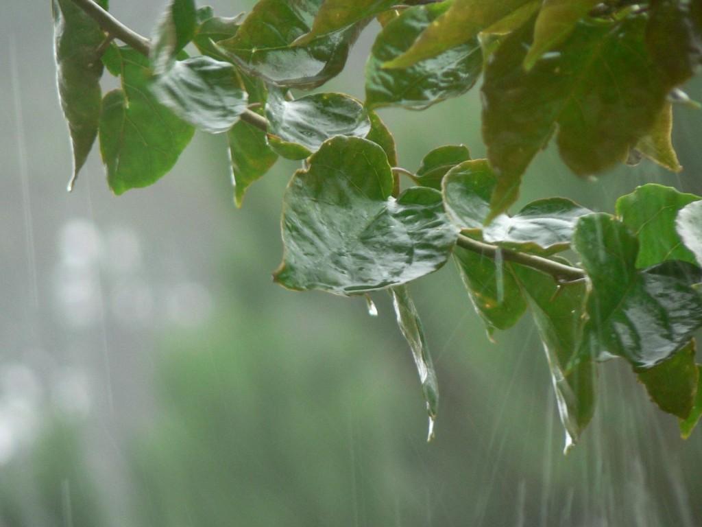 Registros de lluvia en nuestra región