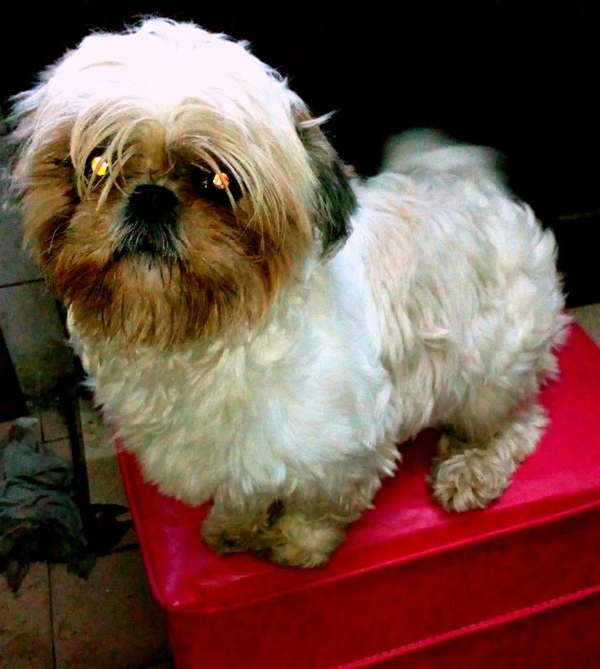 Sierra de la Ventana – Se extravió una mascota y gratificarán su devolución
