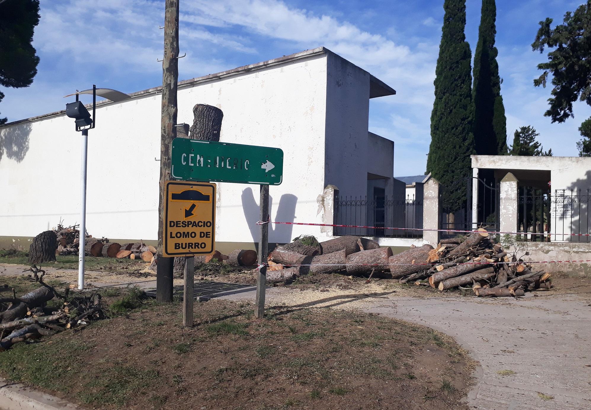 Tornquist – Se reemplazarán árboles frente al cementerio local