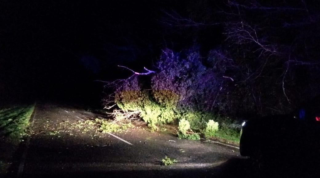 Los fuertes vientos provocaron caídas de árboles y voladuras de techos en el distrito