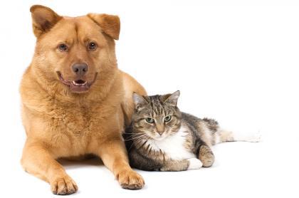 Por qué se celebra el «Día del Animal» hoy 29 de Abril en Argentina